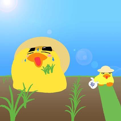ヒヨコと田植え