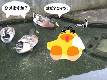gantsuke.jpg