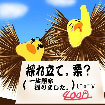 kurihiyo.jpg